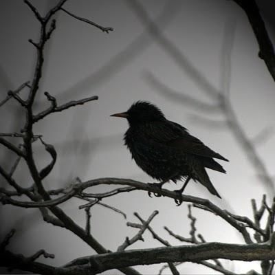 bird_tree_fog