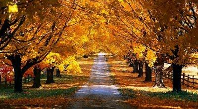 autumn_road_2_2