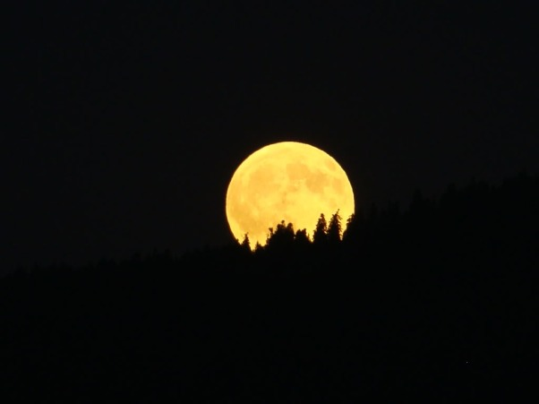 full-moon-scary-over-spruce-trees