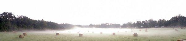 foggy-hayfield-very-wide-screen-greg-hall