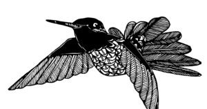Hummingbird2016-e1500180599963-300x158