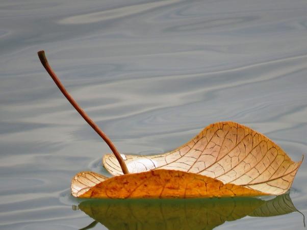 leaf-floating-2438419_960_720