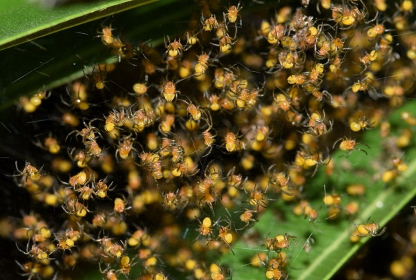 spiders-1622843_960_720