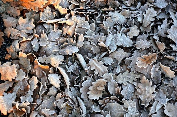 leaves-2398426_960_720