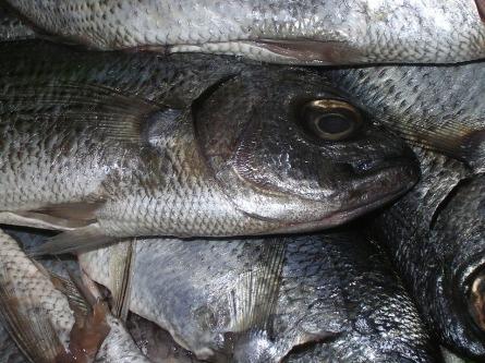 fish-2928323_960_720